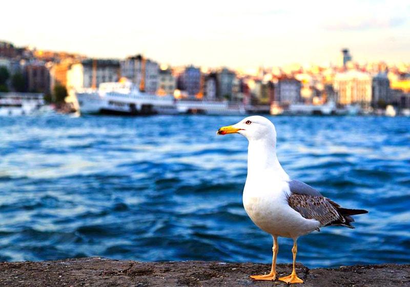 اسطنبول البوسفور